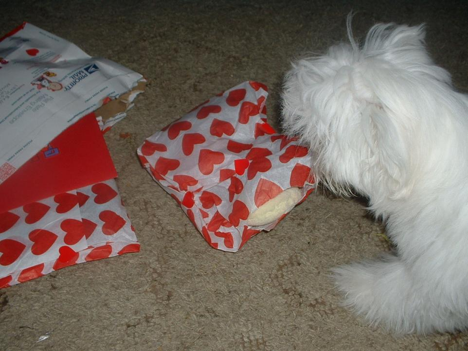 Finn's Valentine-003.jpg