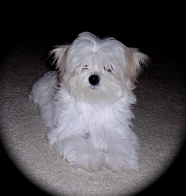 Meet Molly-10-18-12-molly.jpg