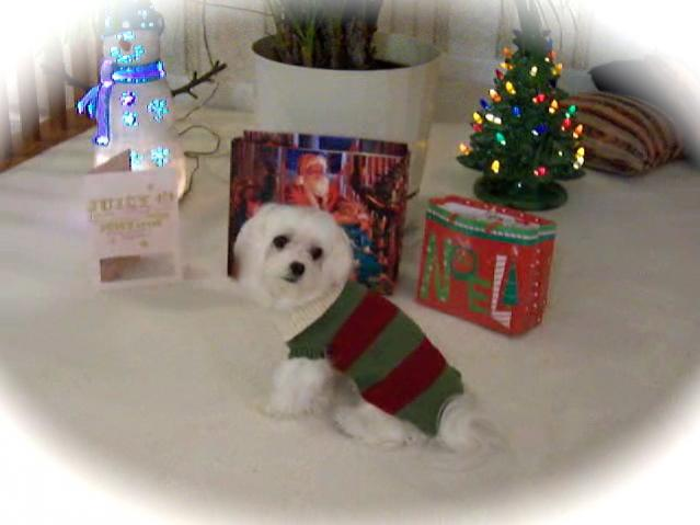 Holiday Picture Contest-100_7950_3.jpg