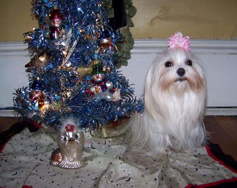Holiday Picture Contest-12-12-2012-028.jpg