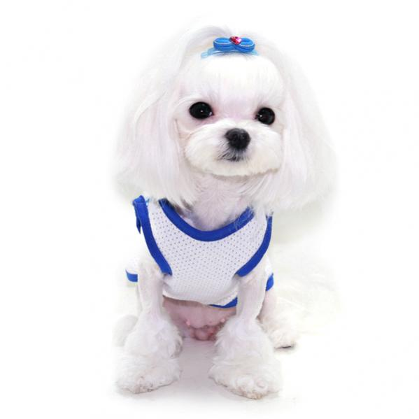 Korean Cut on Secret - Maltese Dogs Forum : Spoiled ...