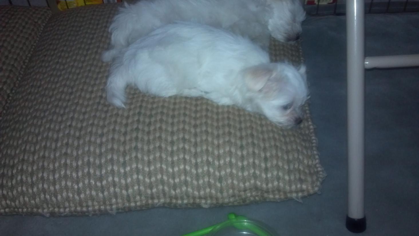 Kaylla and Khloee-2012-11-29_15-41-00_616.jpg