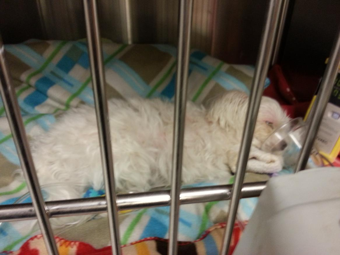 Update:  Poor Biscuit is back in ER-20121211_210328.jpg