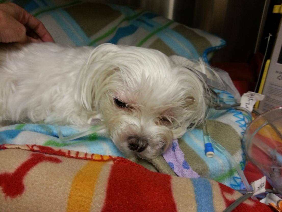 Update:  Poor Biscuit is back in ER-20121211_211337.jpg