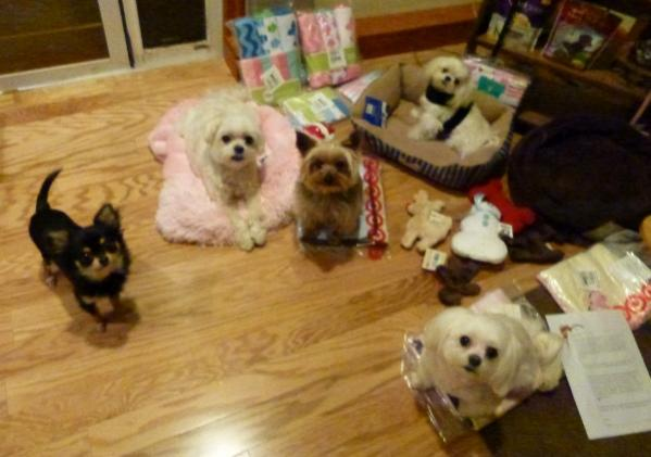 Santa Paws visited The A Team!!!!-3-kids-loot-600x422-.jpg