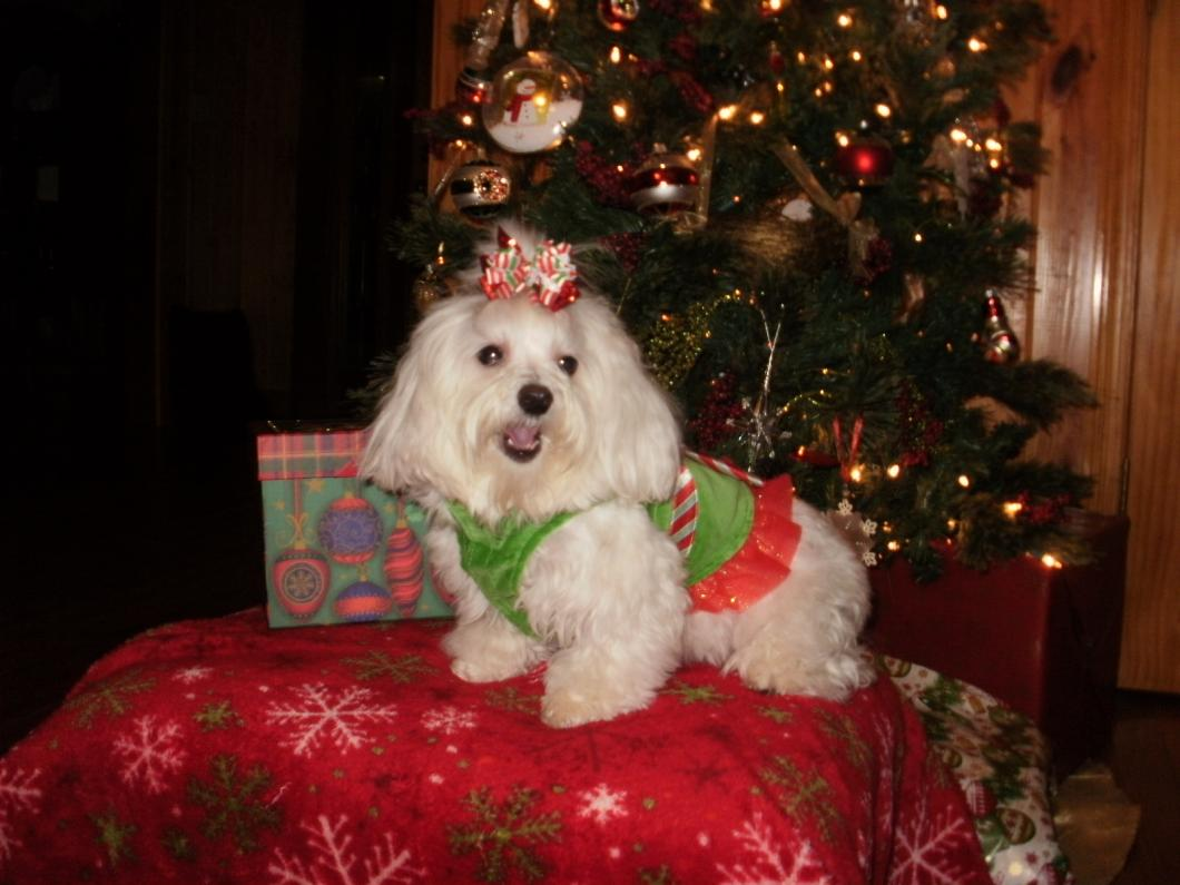 Holiday Picture Contest-abbigail-christmas-2012-103-.jpg