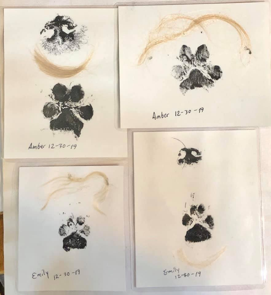Amber and Emily are at the bridge together-amber-emily-paw-nose-prints-laminated.jpg