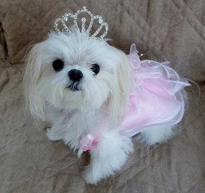 Name:  Ava in a Tiara.jpg