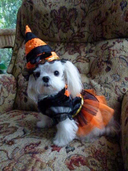 Organic Pumpkin Shampoo & Conditioner Giveaway! Enter your pet with a Halloween photo-ava-sweet-witch-450x600-.jpg
