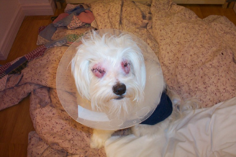 Billy Had Both Of His Eyes Removed-billy_after_surgery.jpg