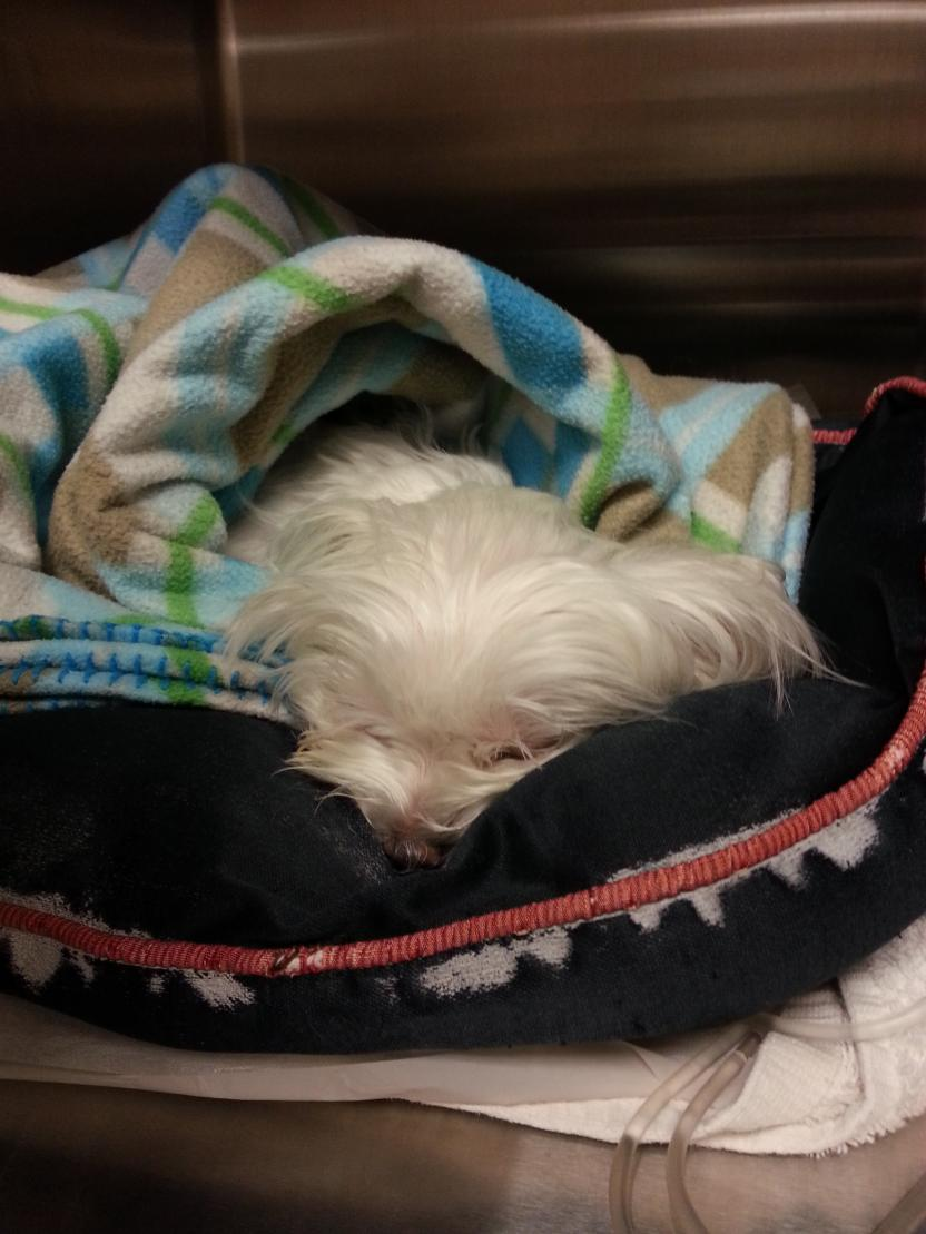 Update:  Poor Biscuit is back in ER-biscuit-er-2nd-major-seizure.jpg