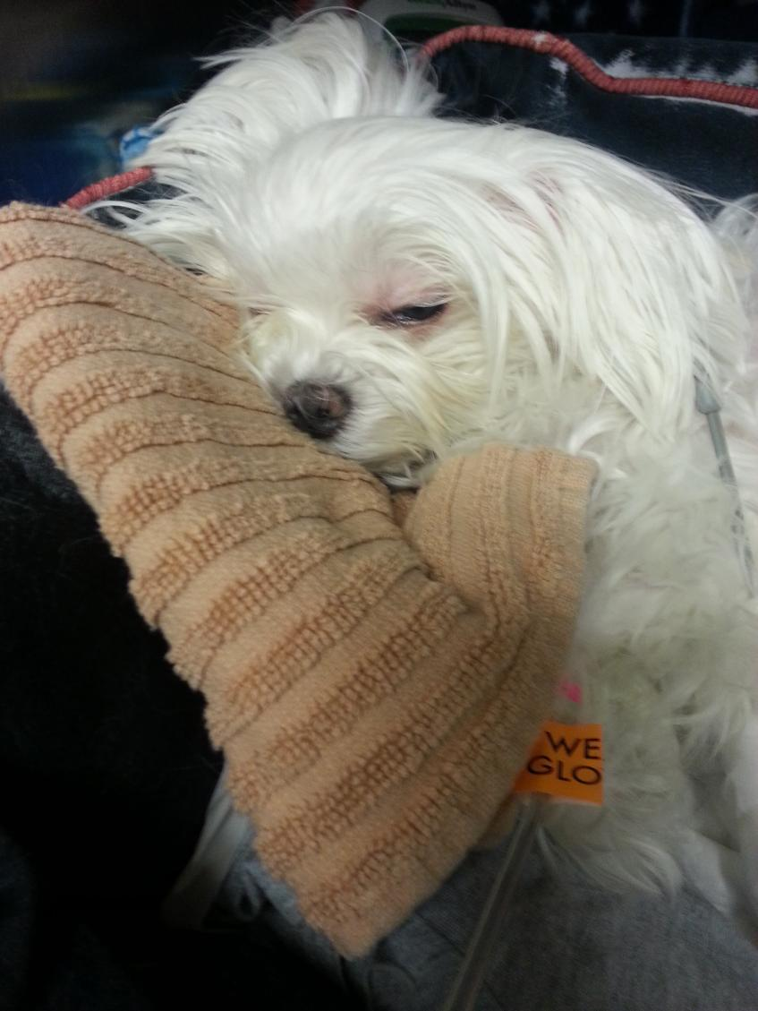 Update:  Poor Biscuit is back in ER-biscuit_afternoon_visit16_12-11-12.jpg