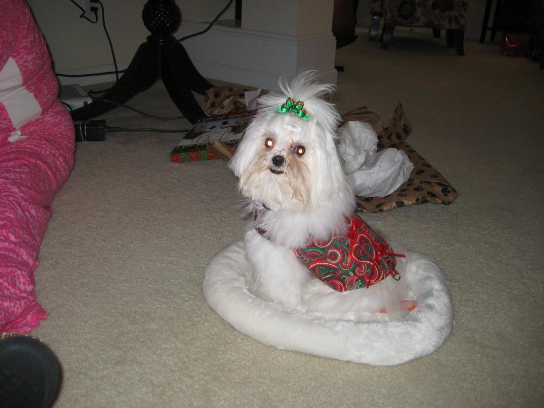 Giovanni's Secret Santa Reveal!-catbed.jpg