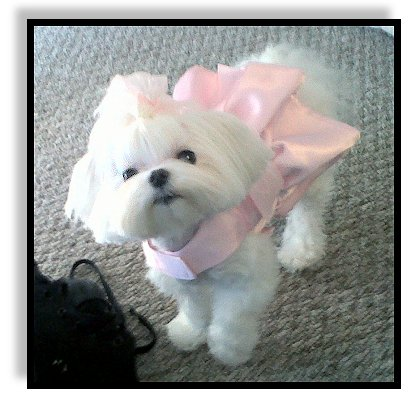 Me finks haircuts are for da dogs!!!-cosymay410.jpg