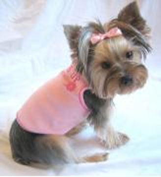 Yorkie Haircut Pictures http://spoiledmaltese.com/forum/49-anything-goes/61977-what-do-you-all-think-haircut-my-yorkie.html