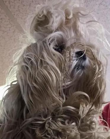 Ling Ling got a new haircut today 💕-dd298167-e51f-4b43-83f6-f455e8415f86.jpeg