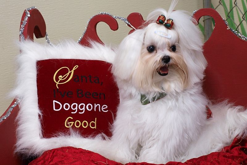 I Saw Santa Paws!-doggone-good.jpg