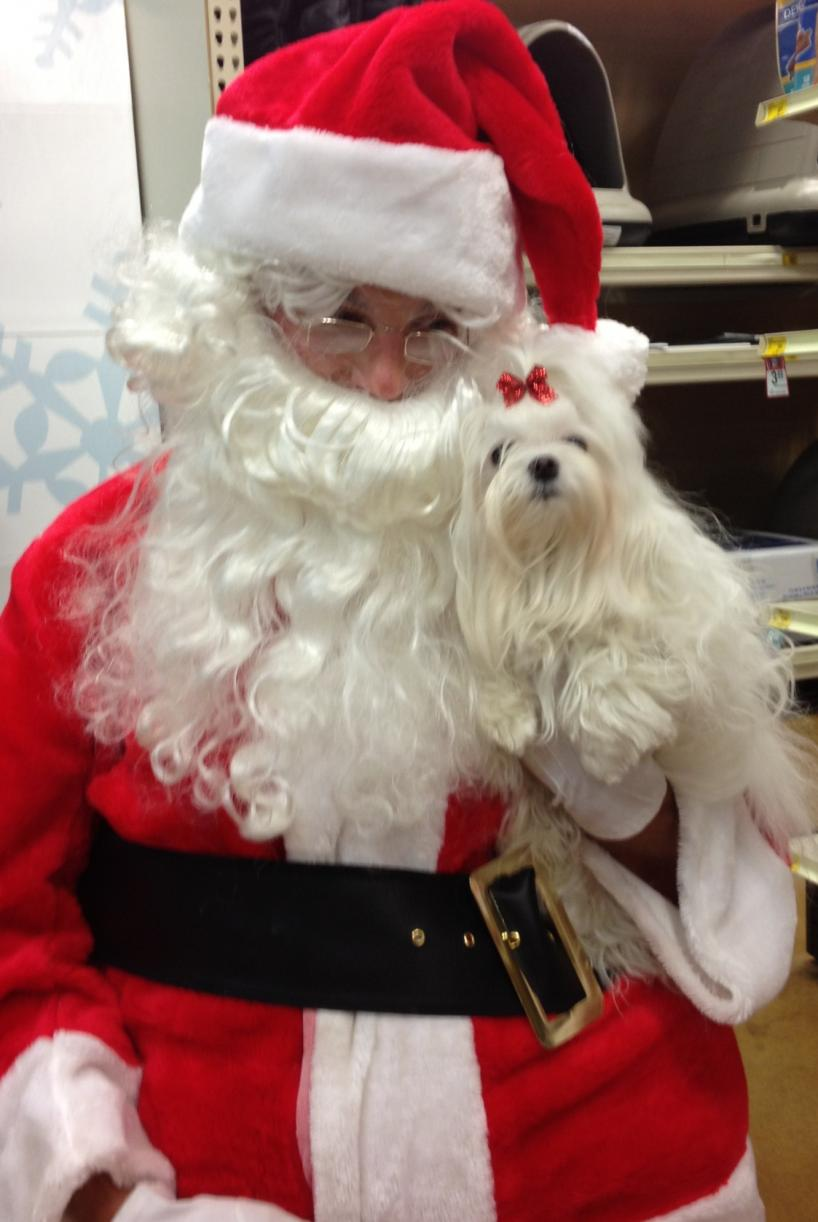 Merry Christmas from Flurry & Santa Paws (my husband)-flurry-santa-paws.jpg