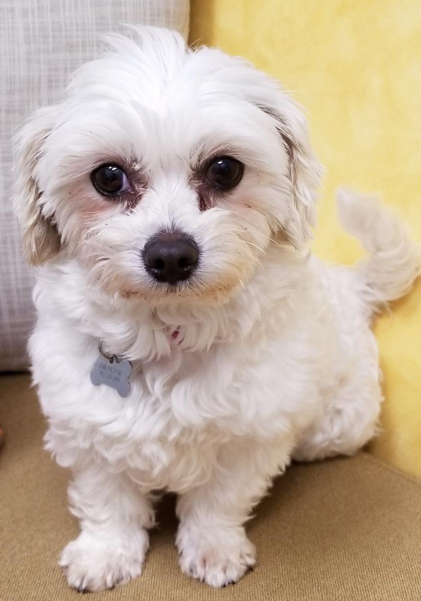 Korean Dog Meat Trade Rescue needs Surgery-fullsizeoutput_3394.jpg