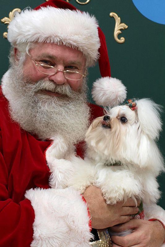 I Saw Santa Paws!-giosanta1.jpg