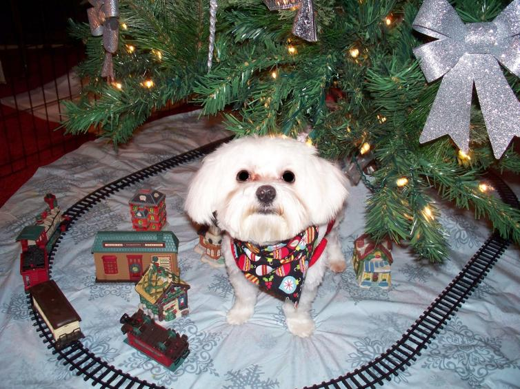 Holiday Picture Contest-henry-christmas-2012-small.jpg