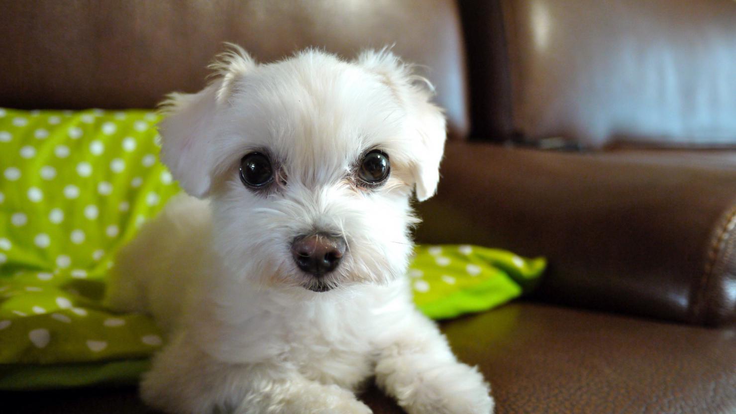 Puppy Cuts-image.jpg
