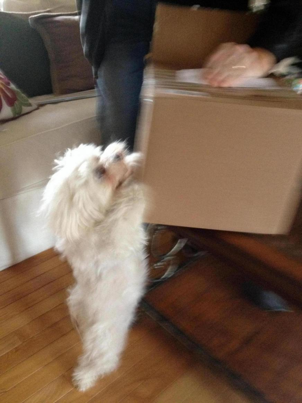 Bella's SS reveal!-image_1419572574676.jpg