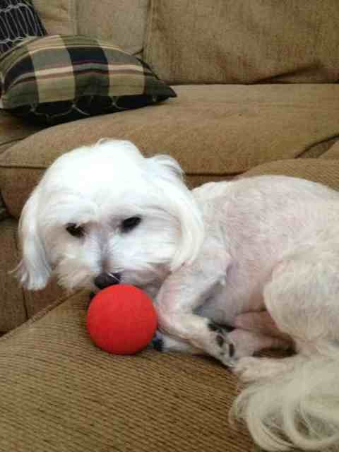 I'm a lazy dog... But don't touch my ball!-imageuploadedbypg-free1353441118.577980.jpg