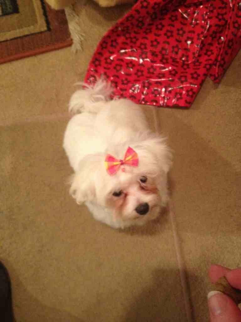 Daisy got groomed-imageuploadedbypg-free1353617519.878794.jpg