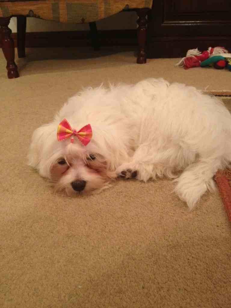 Daisy got groomed-imageuploadedbypg-free1353617565.391790.jpg