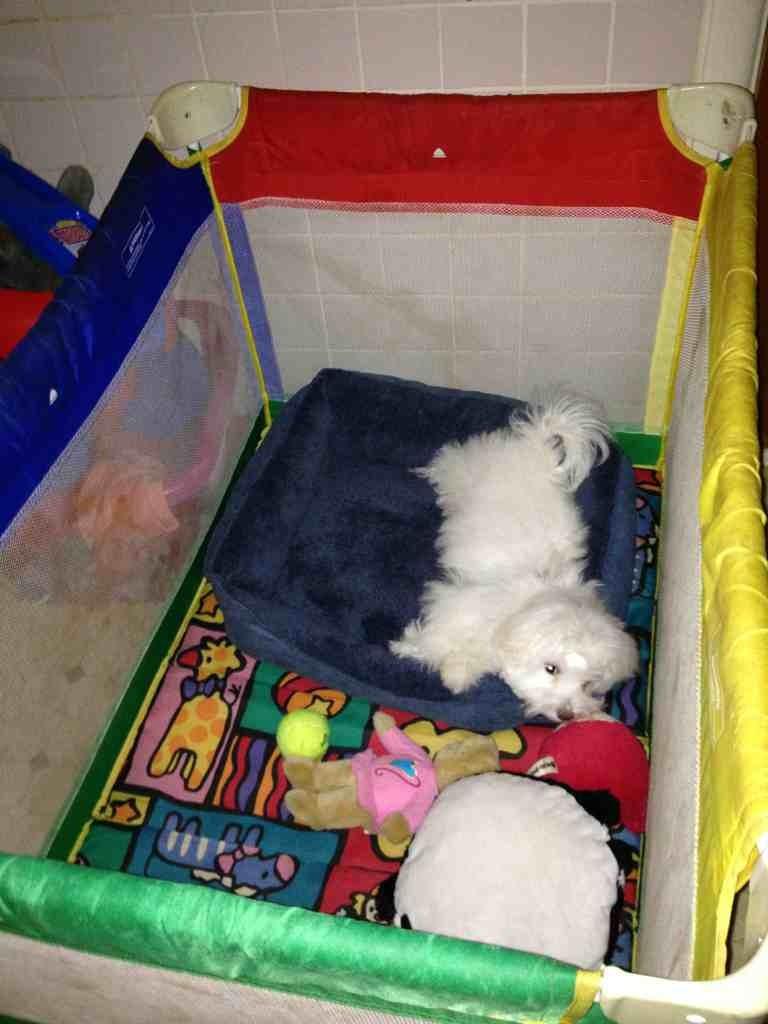 New bed<3-imageuploadedbypg-free1353711151.857871.jpg