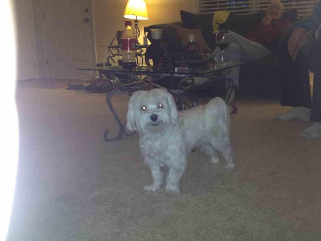My sweet Bella-imageuploadedbypg-free1353878400.051342.jpg