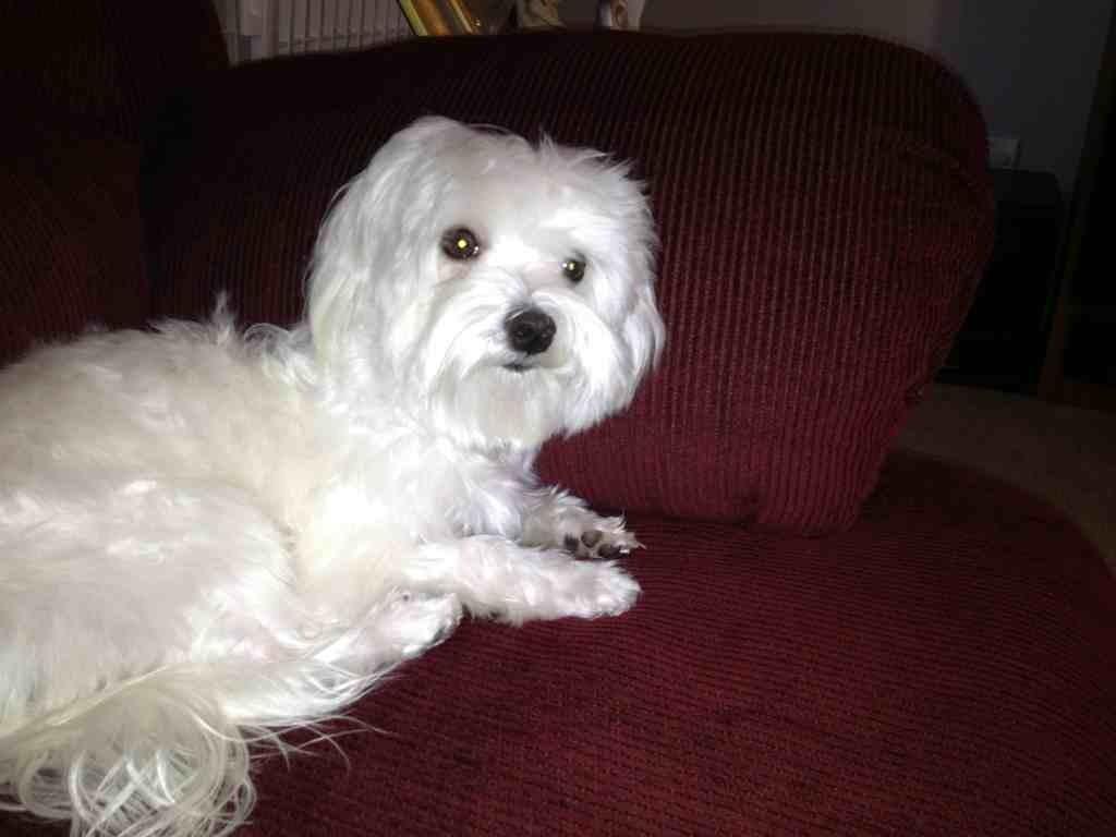 My sweet Bella-imageuploadedbypg-free1353878526.500240.jpg