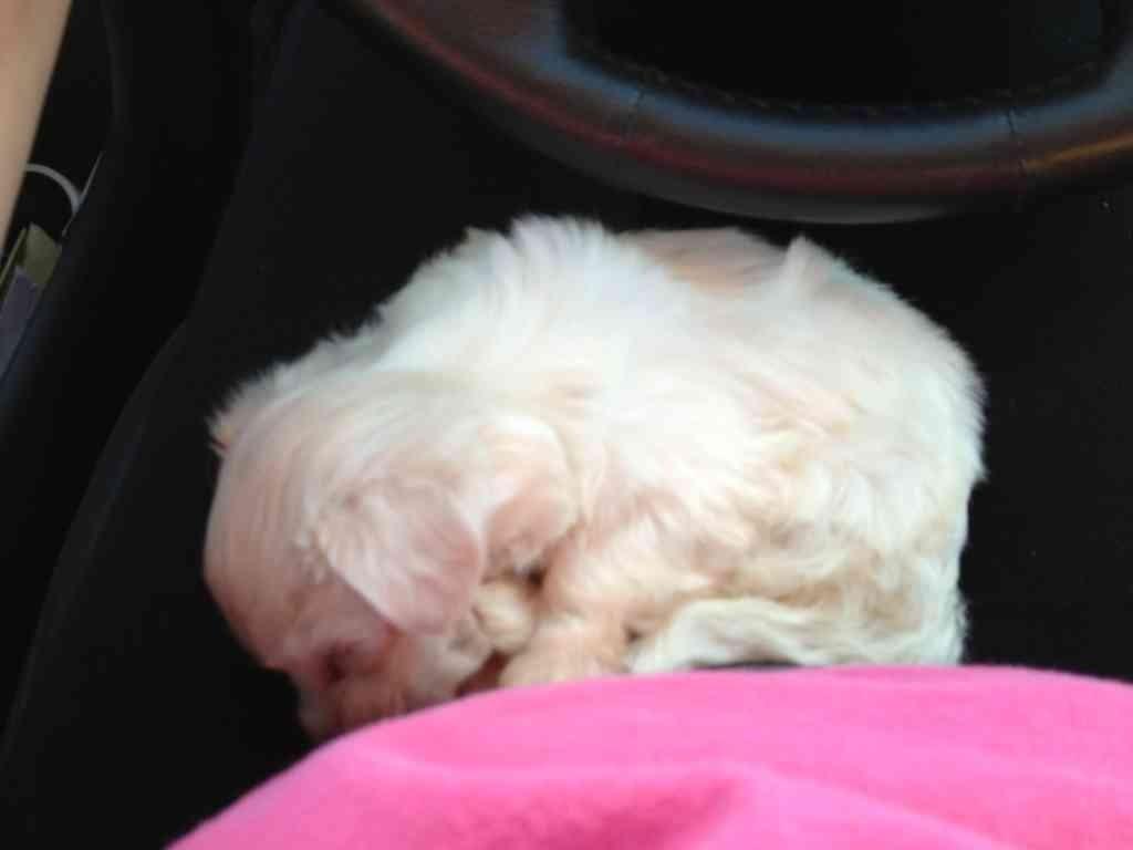 Tiny Molly<3-imageuploadedbypg-free1353883389.606238.jpg