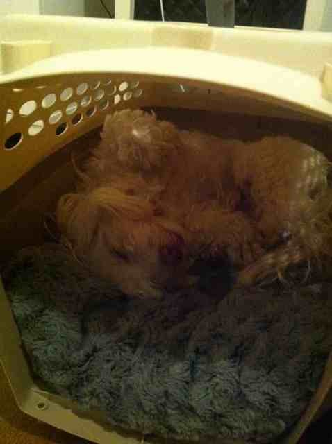 Sleeping arrangements-imageuploadedbypg-free1354428746.828144.jpg
