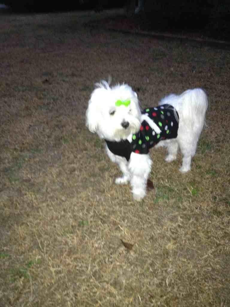 Christmas Sweater-imageuploadedbypg-free1354745844.030936.jpg