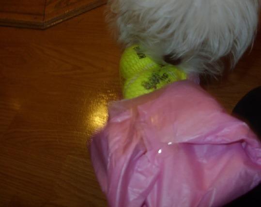Sophie's SS Reveal..-imageuploadedbypg-free1355294811.776003.jpg