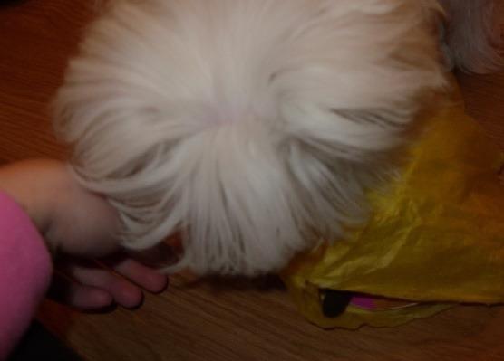 Sophie's SS Reveal..-imageuploadedbypg-free1355294910.558036.jpg