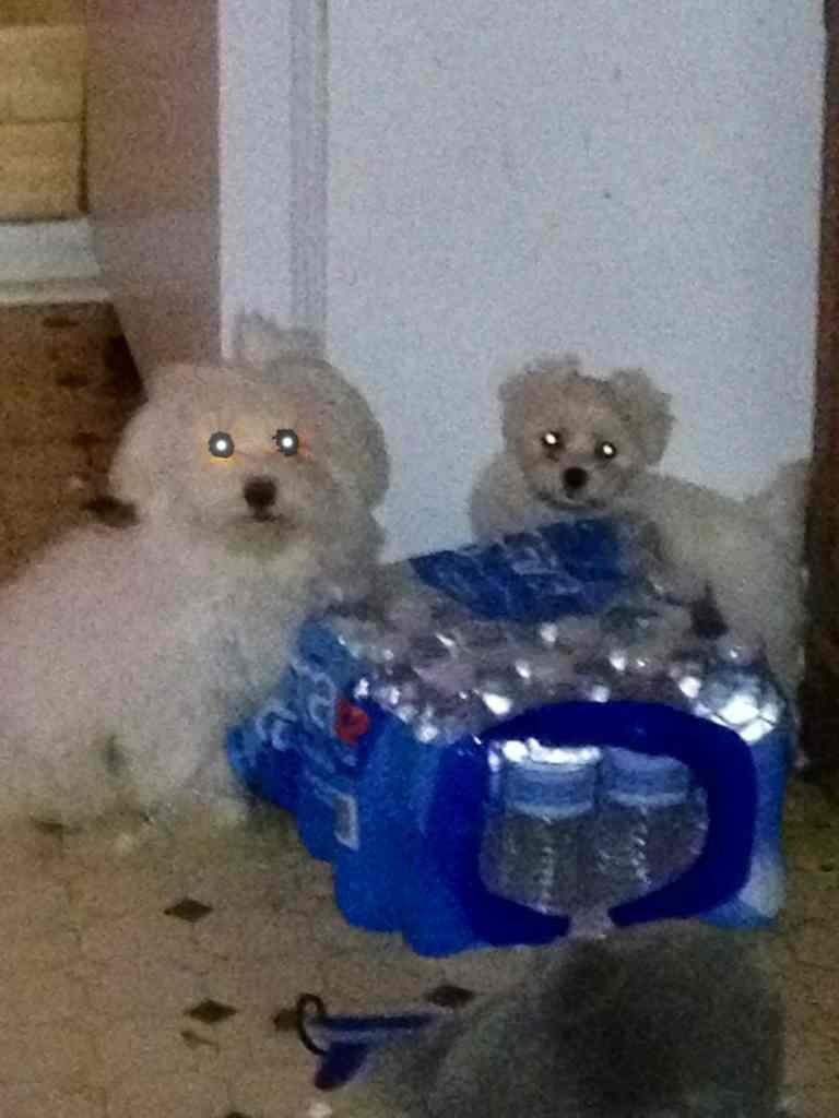 Ghost Pupppies!-imageuploadedbypg-free1355693267.122917.jpg