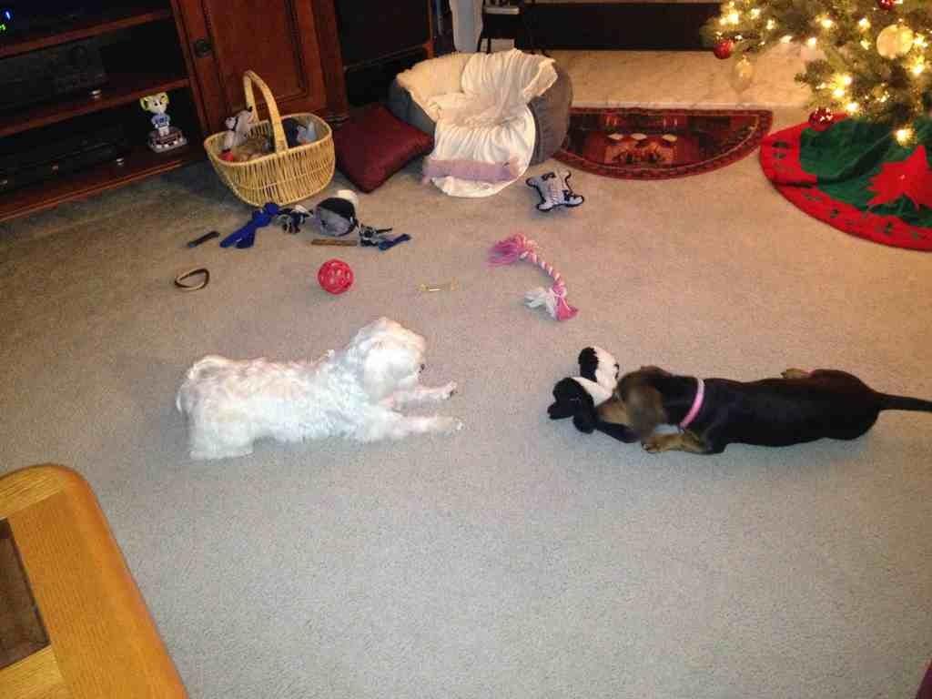 Bella & Gracie-imageuploadedbypg-free1355700796.024661.jpg