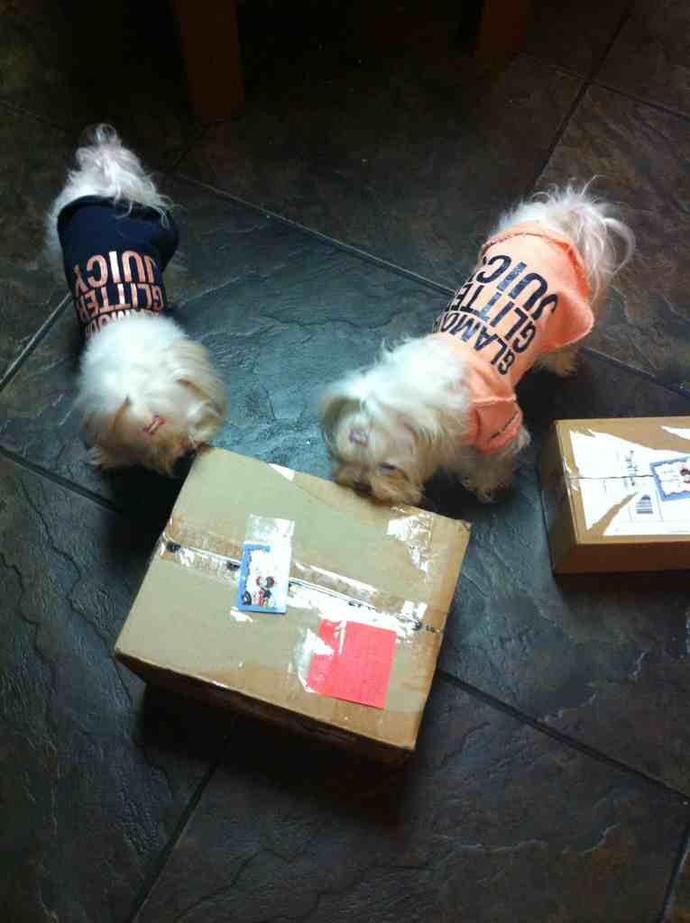 Bailey, Sophia, & Lollypop's S.S. Reveal-imageuploadedbypg-free1356057733.618114.jpg