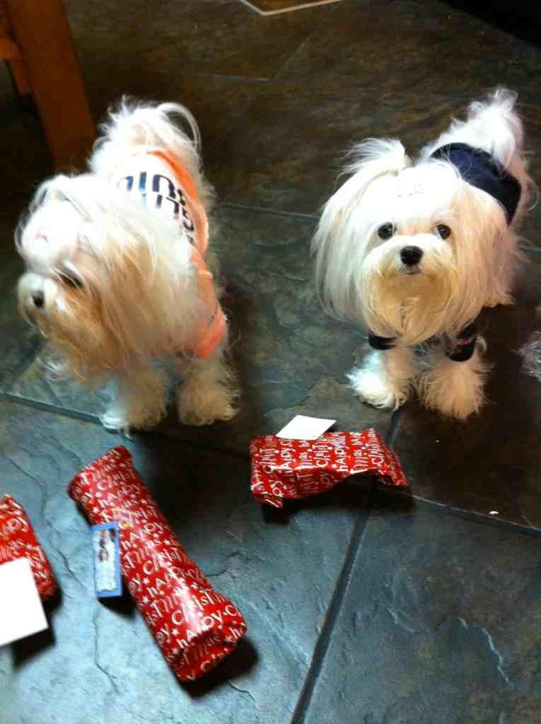 Bailey, Sophia, & Lollypop's S.S. Reveal-imageuploadedbypg-free1356057910.220761.jpg
