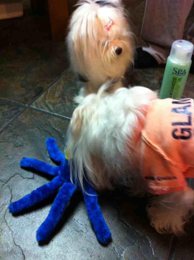 Bailey, Sophia, & Lollypop's S.S. Reveal-imageuploadedbypg-free1356058004.817589.jpg