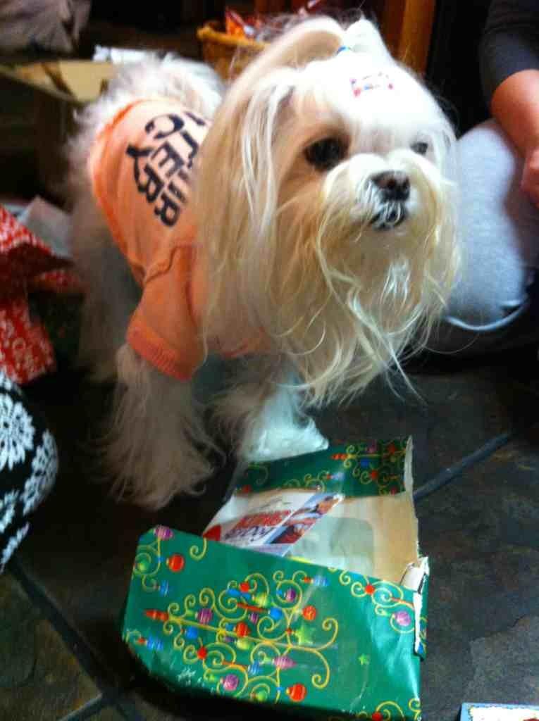 Bailey, Sophia, & Lollypop's S.S. Reveal-imageuploadedbypg-free1356058318.180730.jpg