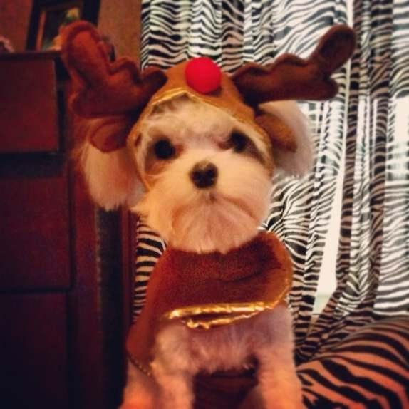 Merry Christmas-imageuploadedbypg-free1356403885.017037.jpg