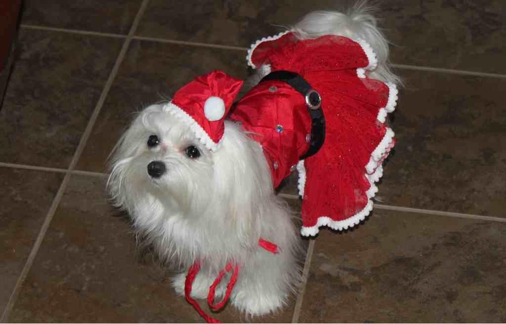 A very doggie Christmas-imageuploadedbypg-free1356502345.980892.jpg