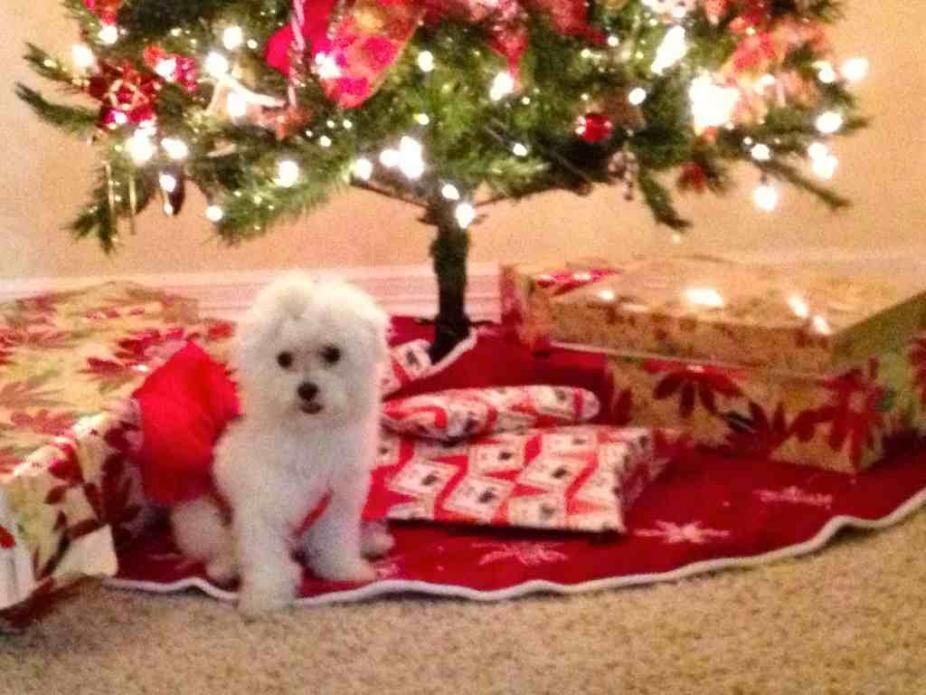 A very doggie Christmas-imageuploadedbypg-free1356502371.808563.jpg