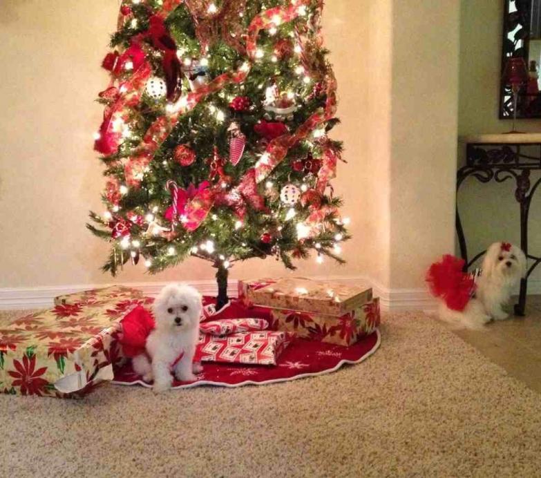 A very doggie Christmas-imageuploadedbypg-free1356502383.557863.jpg