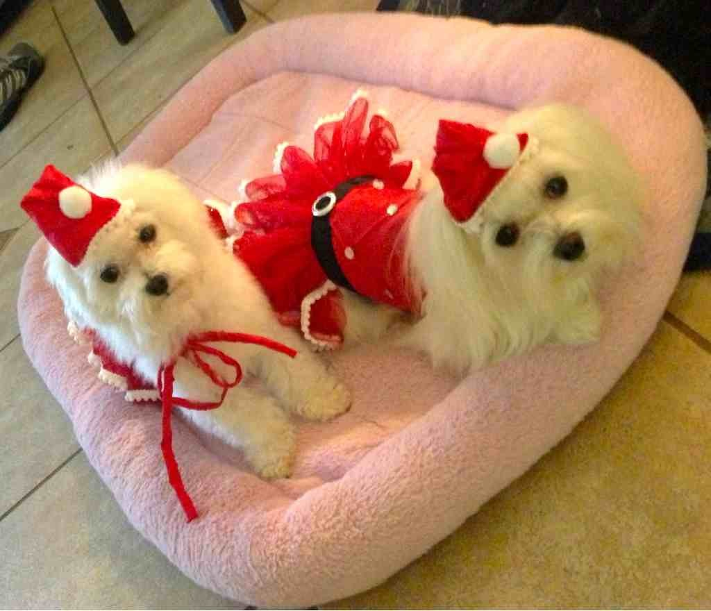 A very doggie Christmas-imageuploadedbypg-free1356502401.608333.jpg