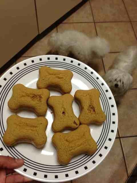 A very doggie Christmas-imageuploadedbypg-free1356502454.574964.jpg